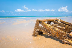 Щипцы Gooseneck на пиломатериале на пляже Стоковое Фото