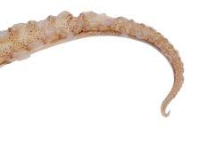 щупальца кальмара Стоковая Фотография