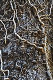 щупальца плюща Стоковая Фотография RF