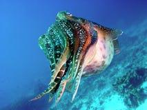 щупальца подводные Стоковое Изображение