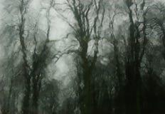 ые древесины Стоковая Фотография RF