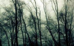 ые древесины Стоковые Фотографии RF