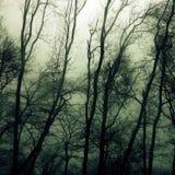ые древесины Стоковые Изображения RF