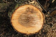 Ые деревья Куча деревьев на том основании Стоковое Изображение