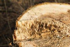 Ые деревья Куча деревьев на том основании Стоковые Изображения