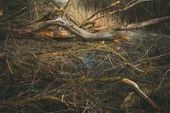 Ые деревья Куча деревьев на том основании Стоковые Фото
