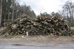 Ые деревья Стоковые Фото
