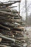 Ые деревья Стоковая Фотография RF
