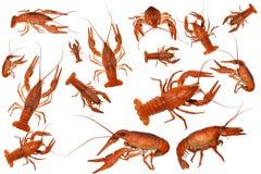 ые изолированные crawfish Стоковая Фотография RF