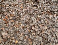 ые листья осени Стоковое Изображение