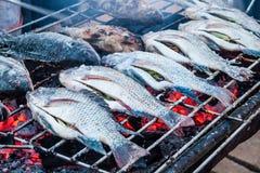 Ые рыбы Стоковое Изображение