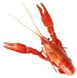 ые crawfish Стоковое Изображение RF