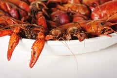 ые crawfish Стоковая Фотография RF