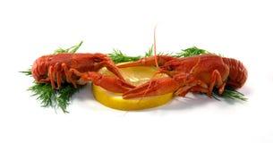 Ые Crawfish Стоковое Фото