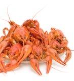 ые crayfish крупного плана Стоковые Фотографии RF