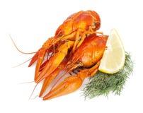 Ые crayfishes с ломтиком и укропом лимона Стоковое Изображение