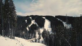 лыжа Стоковые Изображения RF