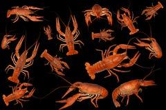 ый комплект crawfish Стоковое Изображение