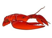 ый красный цвет омара бесплатная иллюстрация