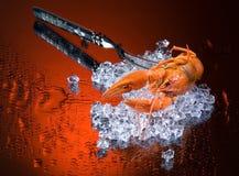ый льдед crawfish Стоковая Фотография