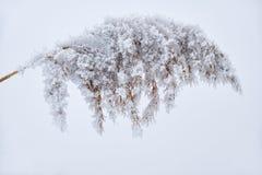 ый снежок травы Стоковое Фото