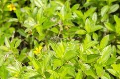 Ый Dragonfly Стоковое Изображение