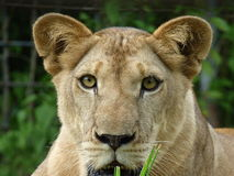 львев Стоковые Изображения
