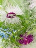 льдед замерли цветками, котор Стоковые Изображения RF