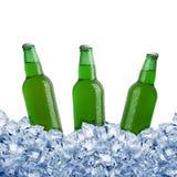 льдед питья бутылок пива предпосылки холодный Стоковое фото RF