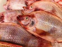 льдед рыб свежий Стоковые Изображения