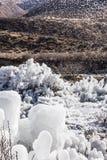 льдед цветков Стоковое Фото