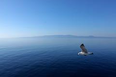 эгейский полет над морем Стоковые Изображения