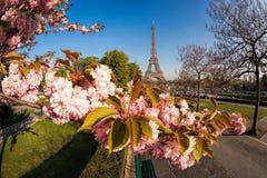 Эйфелева башня с деревьями весны в Париже, Франции Стоковое фото RF