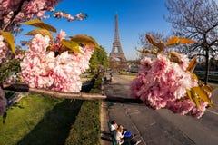 Эйфелева башня с деревьями весны в Париже, Франции Стоковые Фотографии RF