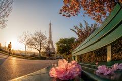 Эйфелева башня с деревьями весны в Париже, Франции Стоковое Фото