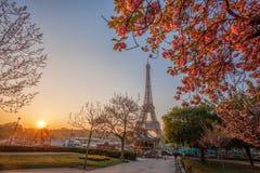 Эйфелева башня с деревьями весны в Париже, Франции Стоковая Фотография RF