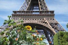 Эйфелева башня и солнцецветы Париж Стоковая Фотография