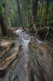 Экваториальный лес с деревьями и кустами Стоковая Фотография RF