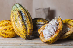 Эквадорское какао Стоковая Фотография RF