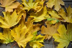 экземпляр предпосылки осени выходит космос деревянной Винтажная доска Желтый цвет Стоковое фото RF