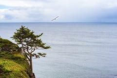 Экземпляр-космос уединённого дерева на скале Стоковая Фотография