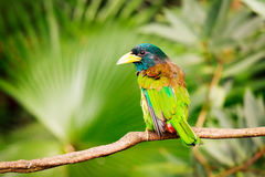 Экзотическая красочная птица сидя на ветви Стоковое Изображение RF