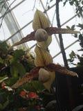 Экзотическая орхидея стоковые изображения rf