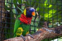 Экзотическая птица на ветви Стоковая Фотография RF