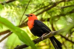 Экзотическая птица сидя на ветви стоковое изображение