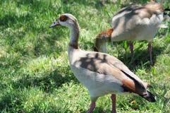 Экзотическая птица Стоковая Фотография