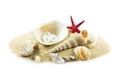 Экзотическая раковина моря. стоковая фотография rf