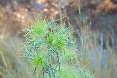 экзотическая флора стоковые фотографии rf