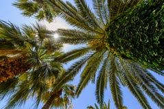 Экзотические ладони с большими зелеными листьями, фото принятым от дна. Стоковая Фотография