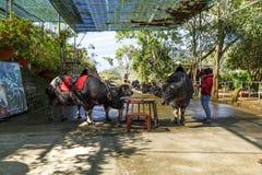 Экзотические животные в зоопарке в Prenn, Lat Da, Вьетнаме стоковое фото rf